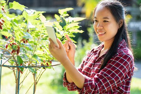 Asian woman using smartphone in mulberry garden
