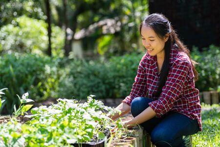 Asian woman farmer planting vegetable in organic garden