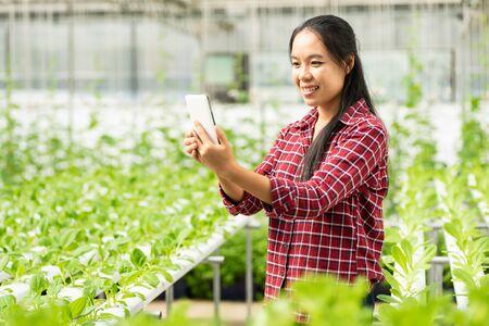 Asian woman farmer using smartphone in vegetable hydroponic farm Zdjęcie Seryjne