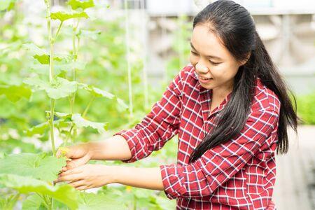 Asian woman farmer in melon farm