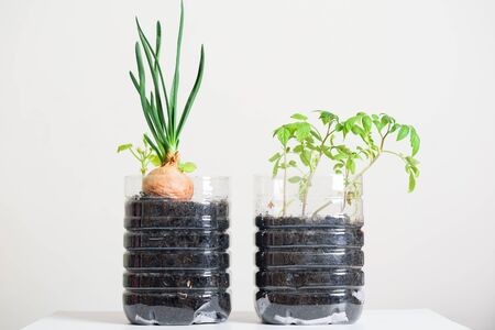 Plasstic bottles water DIY for planting vegetables plant and decoration in garden, reuse and recycle concepts Reklamní fotografie