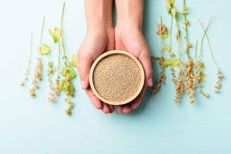 Organic brown quinoa seed in a wooden bowl holding by hand and quinoa plant on pastel color background