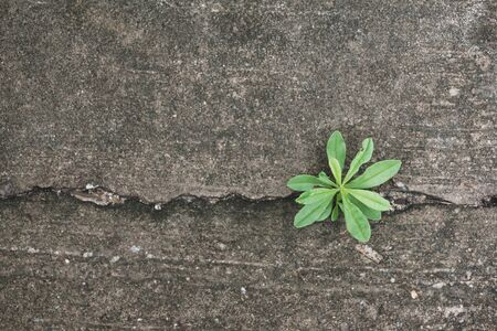 Plant growing from cracked concrete road, New life plant Stock Photo - 150242435