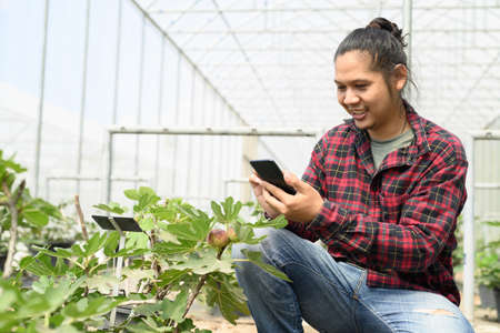 Young man Asian farmer using smartphone for management in organic fig tree greenhouse Banco de Imagens