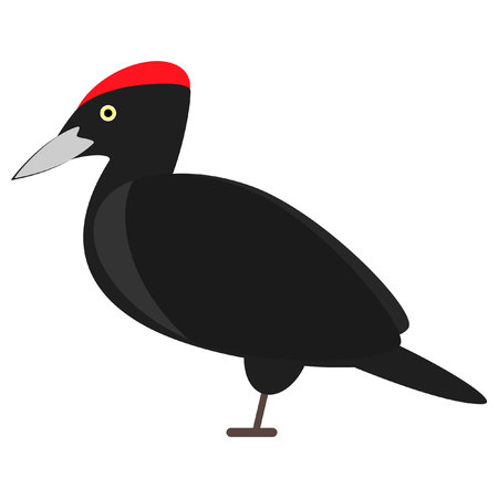 black woodpecker bird. vector. isolated