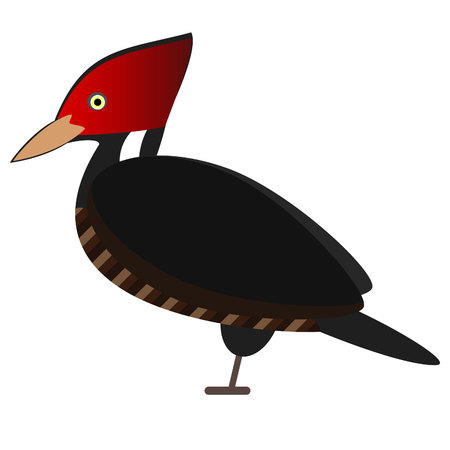 Royal woodpecker, tropical bird. vector illustration. isolated
