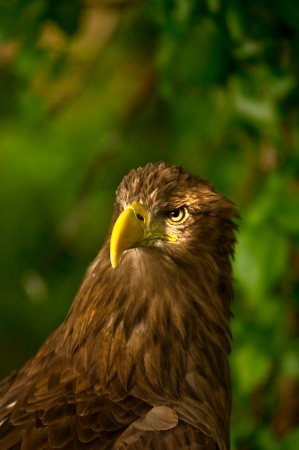 This eagle has a sharp look photo