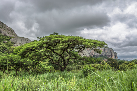 View of a Acacia tortilis tree, tropical landscape and mountains on background, in Malange, Angola Banco de Imagens - 117139024