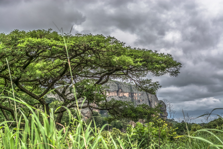 View of a Acacia tortilis tree, tropical landscape and mountains on background, in Malange, Angola Imagens