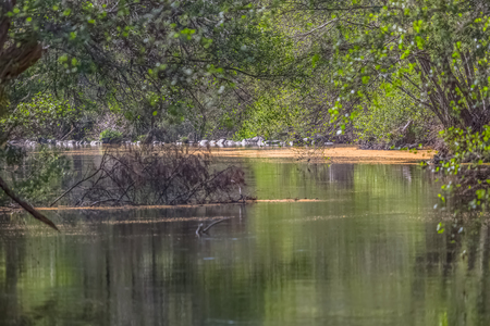 View of Dão river, with trees, rocks and vegetation on the banks, reflections in the water and bright colors, in Alcafache, Portugal 免版税图像