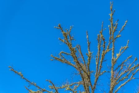 Detailed view of the branches at the top trees, blue sky as background, in Portugal