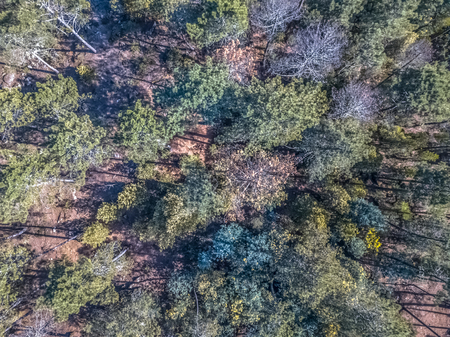Aerial view of drone, with typical Portuguese forest, crown of trees, pines and oaks...