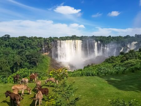 View of the Kalandula waterfalls on Lucala river, Donkeys grazing in a field of herbs, tropical forest and cloudy sky as background, in Angola