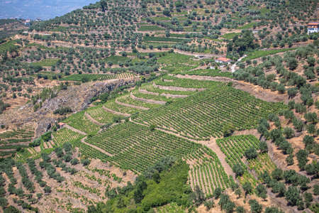 Aerial typical landscape of the highlands in the north of Portugal, levels for agriculture of vineyards, olive tree groves...