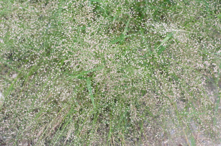 herbivore: Grass weed but the food of herbivore.