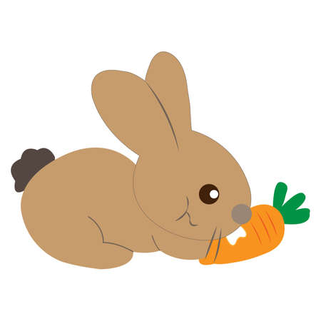 Brown rabbit eating carrots isolated on white background.