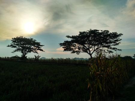 A landscape view, trees in the area of the farmland Banco de Imagens - 120938121
