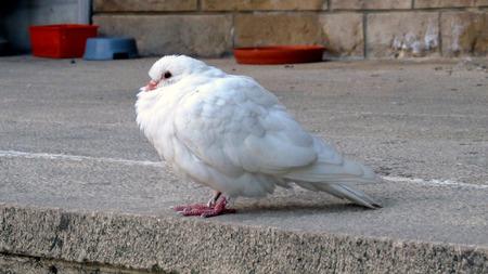 white bird: White Bird Stock Photo
