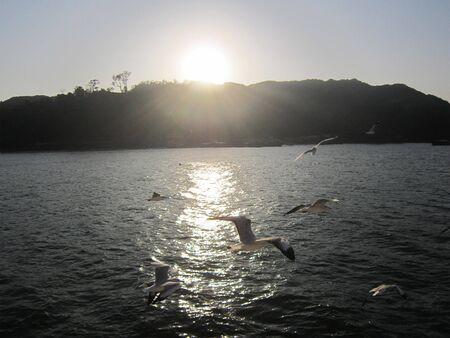 Few siberian birds flying on the river on sunset times
