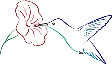 a hummingbird sipping on a flower Illustration
