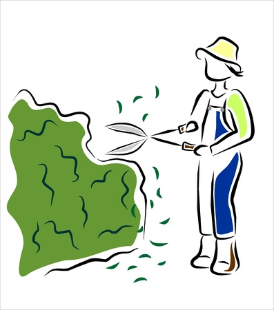 pruning: gardener pruning the hedges in the garden Illustration