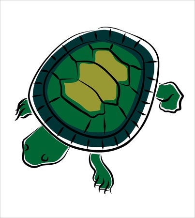 terrarium: drawing of a turtle on a white background Illustration