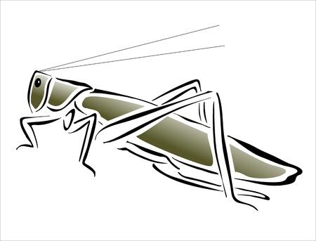 locust: drawing of a grasshopper