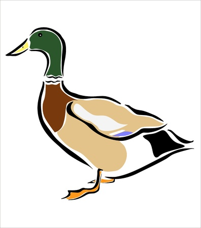 animals feeding: drawing of a duck