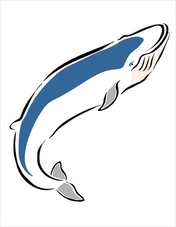 cetacean: drawing of a large whale