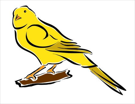oviparous: drawing of a wellow canary Illustration