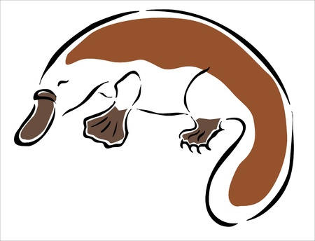 platypus: drawing of a brown, platypus