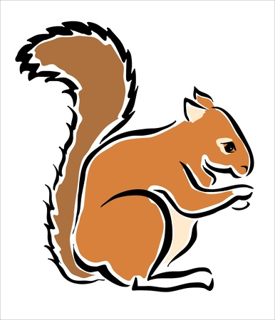 drawing of a brown squirrel Stock Vector - 15327712