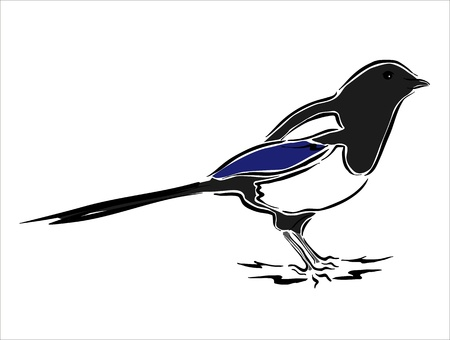 drawing of a magpie
