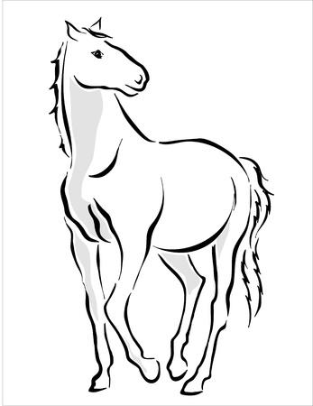 hooves: disegno di un cavallo bianco Vettoriali