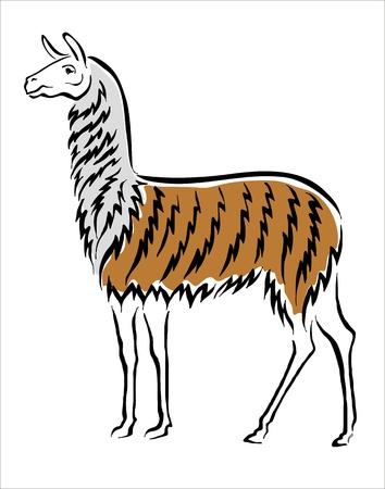 llama: drawing of a llama Illustration