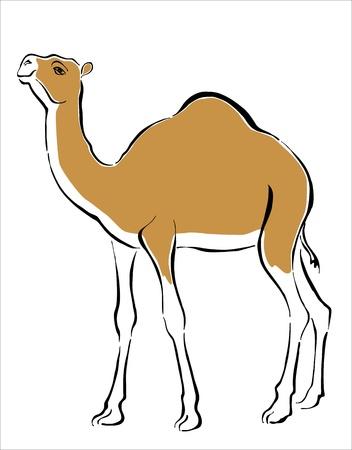 hump: disegno di un dromedario