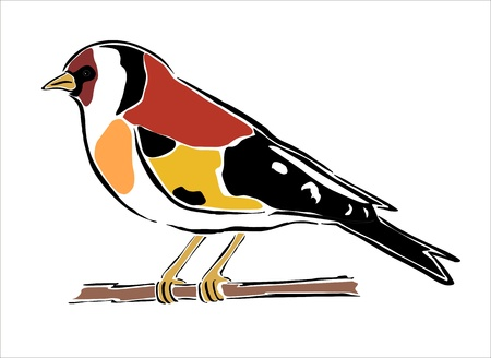 picture of a goldfinch Illustration