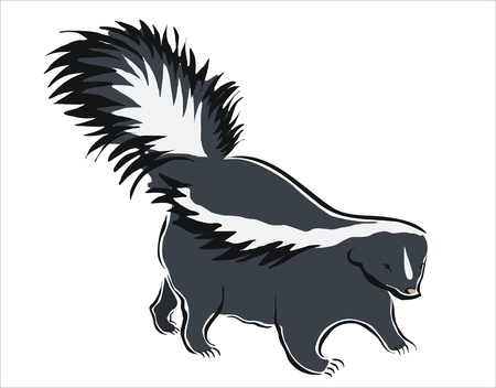 omnivorous: drawing of a black and white skunk