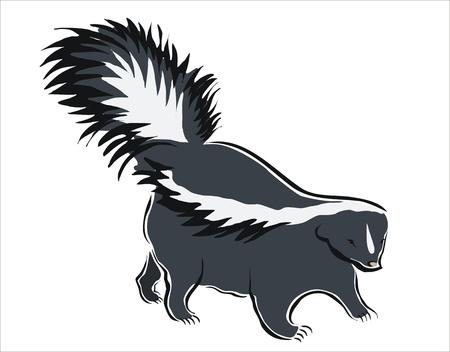 stinktier: Zeichnung eines schwarzen und wei�en Stinktier Illustration