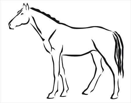 nostril: drawing of a white horse
