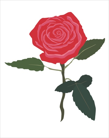 thorn bush: drawing of a red rose