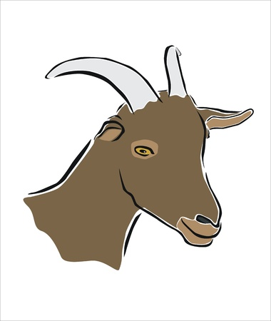 goat head: drawing of the head of a goat