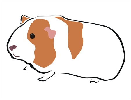 snouts: drawing of a guinea pig