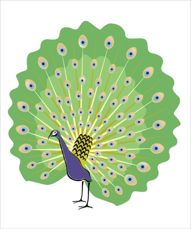 oviparous: drawing of a pretty peacock