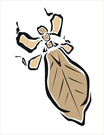 cheat: drawing of a leaf insect