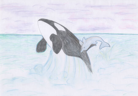 killer whale: dolphin and killer whale jumping