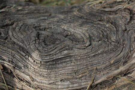 sprawled: Details of above ground root of an old tree. Stock Photo