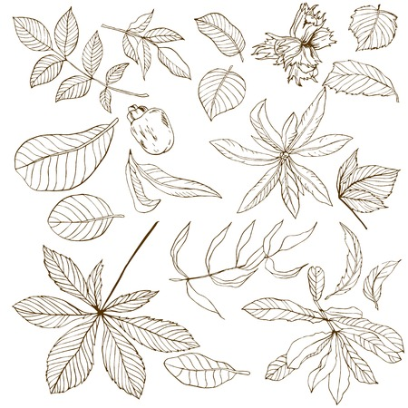 Set of different nuts leaves, hand drawn