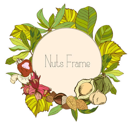 macadamia: Round frame with nuts and leaves, in color