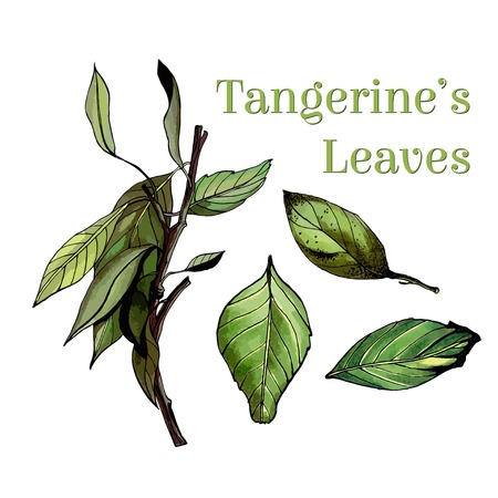 temperate: Watercolor leaves set with branch, hand drawn illustration